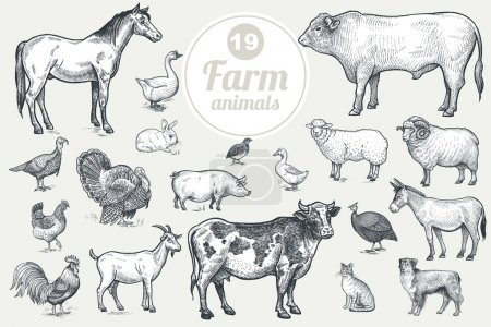 Farm livestock and poultry set.