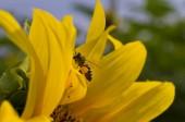 Včely pro nektar