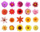 Soubor dvaceti květiny izolovaných na bílém pozadí