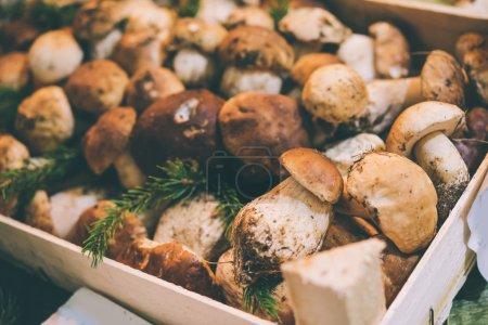 Porcini mushrooms on sale