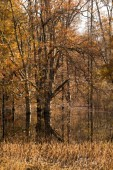 Fall Color Tree Reflection Landscape