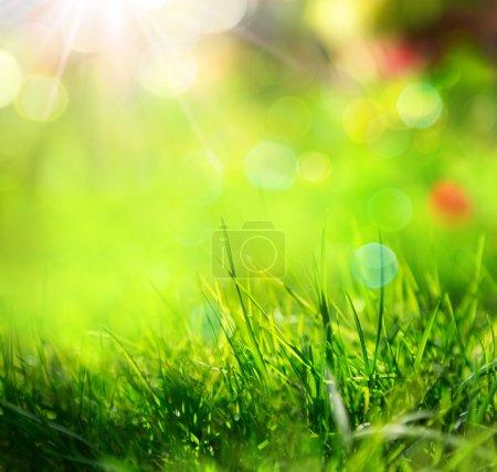 Foto de Fondo de hierba verde con la luz del sol y desenfoques - Imagen libre de derechos