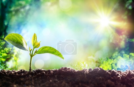 Photo for Growing Sprout - Beginning Of A New Life - Royalty Free Image