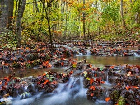 Photo pour Scène de Forrest d'automne idyllique. Beau jet d'eau avec les feuilles tombées. Couleurs dorées de l'automne. Photo de belle soirée - image libre de droit