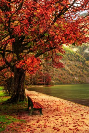 Photo for Idyllic Autumn Scenery at the lovely sea of kings in Berchtesgaden, Germany. Lovely colorful trees in Bavaria - Royalty Free Image