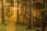 Černý les