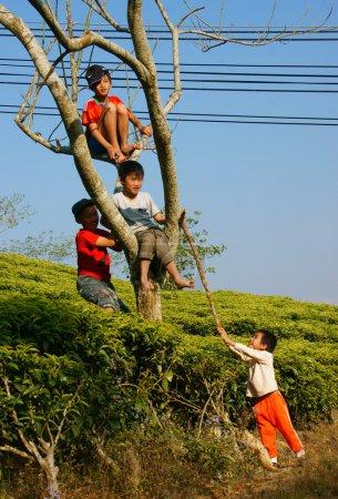 Asian children, active kid, outdoor activity