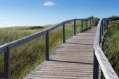 Boardwalk passing through landscape