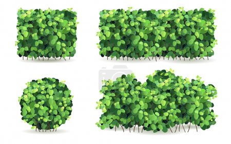 Set of bushes with green leaves of different shapes.