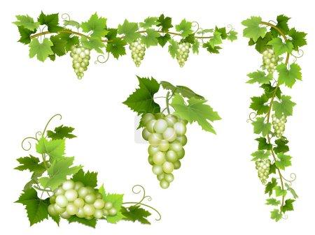 Illustration pour Un ensemble de grappes de raisins blancs. Grappe de baies, branches et feuilles. Illustration vectorielle . - image libre de droit