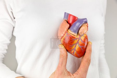 Photo for Female hand showing artificial heart model in front of body - Royalty Free Image