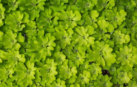 Photo for Green leaves background - Royalty Free Image