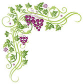 Beautiful grape vines vector decoration