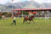 Woman Lunges Horse in Peru