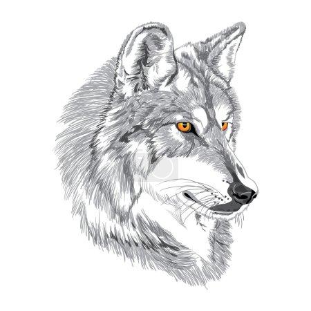 Illustration pour Museau loup avec croquis yeux jaunes - image libre de droit