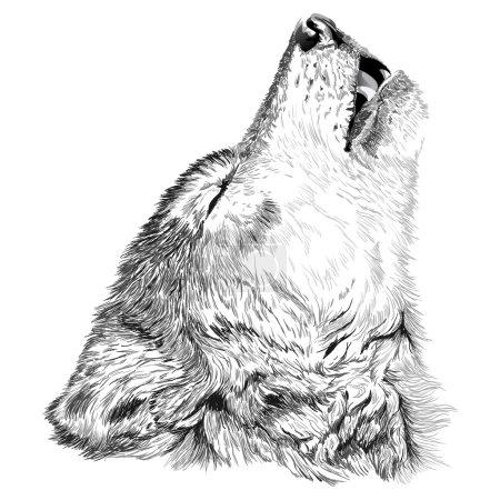 Illustration pour Loup hurle croquis - image libre de droit