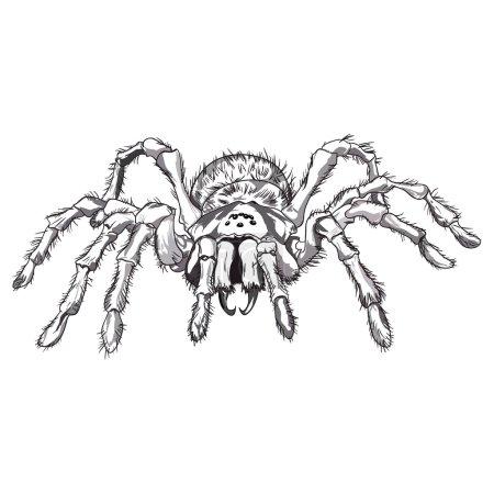 Black spider animal