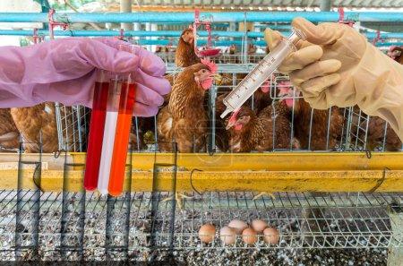 Photo pour Ferme de poulets aux œufs avec laboratoire chimique, main tenant le tube avec une fiole à essai - image libre de droit