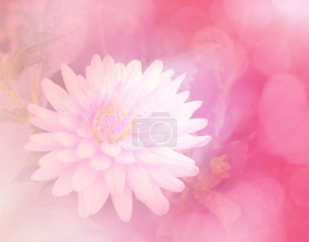 sweet color flower in soft style background
