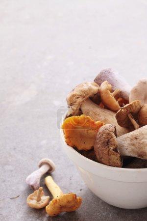 Photo pour Sélection de champignons sauvages dans l'assiette - image libre de droit