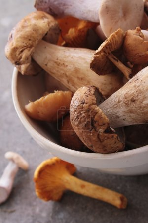 Photo pour Sélection champignon sauvage gros plan - image libre de droit