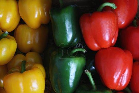 Photo pour Poivron poivrons colorés closeup - image libre de droit