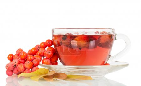 Rowan berries and rosehip tea cup isolated on white.