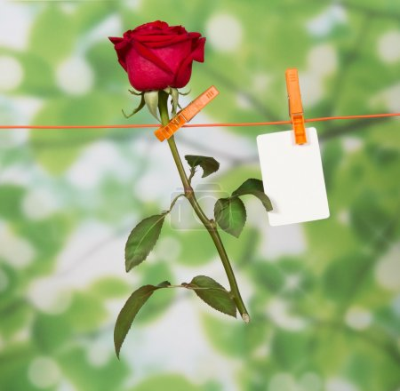 The rose and card hanging