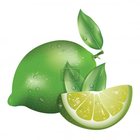 Illustration for Realistic green lemon  with leaves on the white background - Royalty Free Image