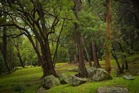 Botanical Garden Hakgala