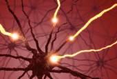 Nervové buňky puls