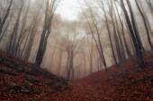 Autumn rainy and foggy forest in Crimea
