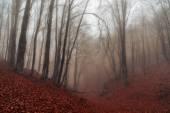 Autumn rainy and foggy forest in Crimea