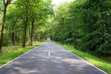 Photo pour Route dans la forêt verte à la journée ensoleillée - image libre de droit
