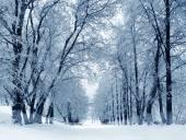 Zimní příroda, alej v parku