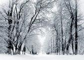 Zimní park ve sněhu