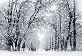 Zimní příroda krajina
