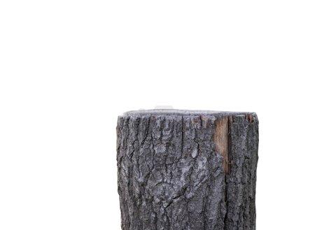 Stump isolated on white