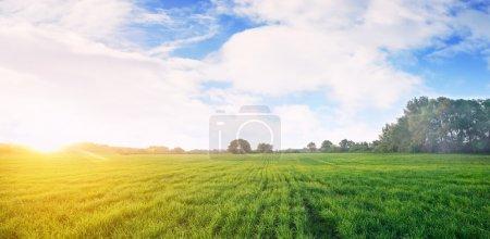 Sunny meadow  in summer
