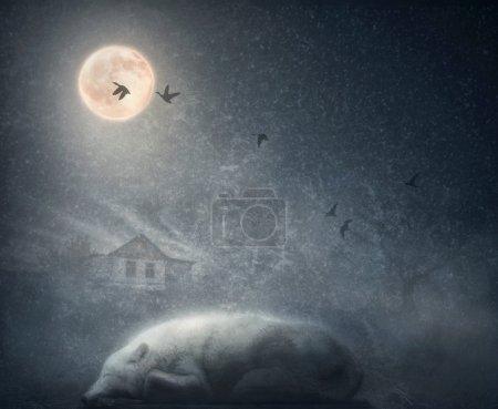 White arctic wolf sleeping under moon