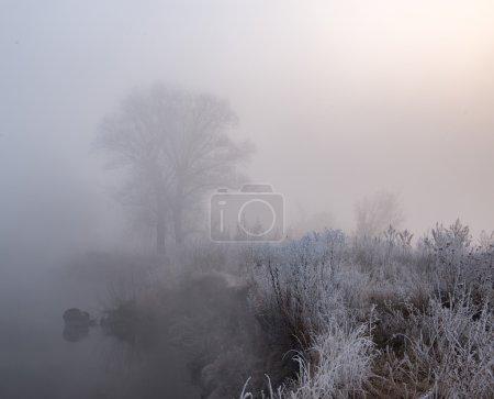 Tree near lake in frosty morning