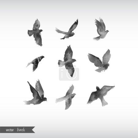 Illustration pour Oiseaux aquarelles. Illustration vectorielle - image libre de droit
