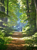 A tunnel of the single lane country road and tall green trees. Sunlight through the tree trunks, shadows on the ground. Fairy summer landscape. Idyllic forest scene. Latvia