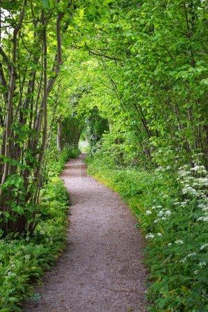 Photo pour Promenade dans le parc de forêt de Stochemhoeve aux Pays-Bas - image libre de droit