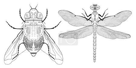 Illustration pour Mouche noire dessinée à la main et libellule sur fond blanc - image libre de droit