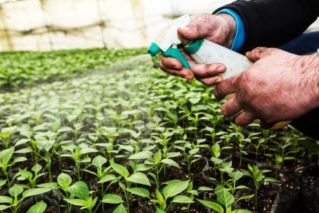 Close up in the hands of a man while spraying the small plants i
