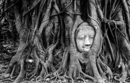 Black and white buddha head sandstone