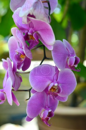 Purple orchid flowers, selective focus and shallow DOF