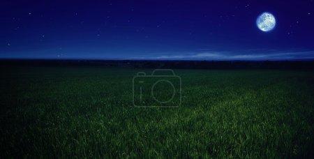 Moonlit night in wheat field