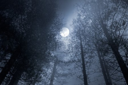 Photo for Forest in a foggy full moon night - Royalty Free Image